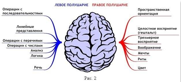 как развить мозг на 100 процентов